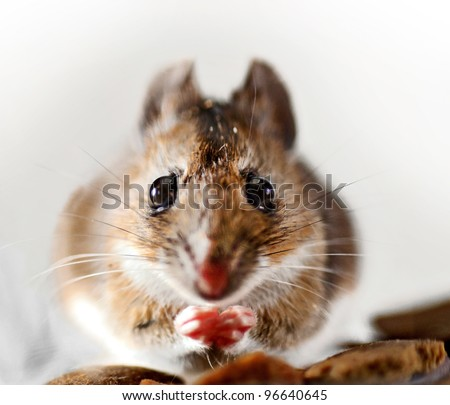 Close up of wild mouse captured in glass jar - stock photo