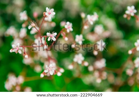 Close-up of wildflowers growing in a grassy meadow. Close macro shot. Beautiful nature. - stock photo