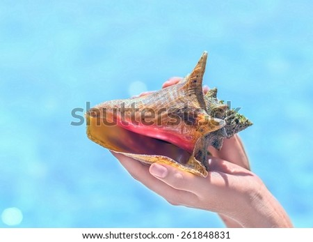 Close up of woman hand holding big beautiful rapana sea shell with mollusk - stock photo