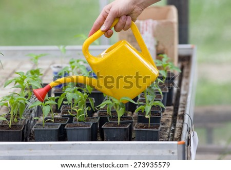 Close up of woman's hand watering plants in greenhouse - stock photo
