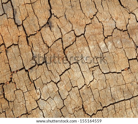 close-up of wood texture background