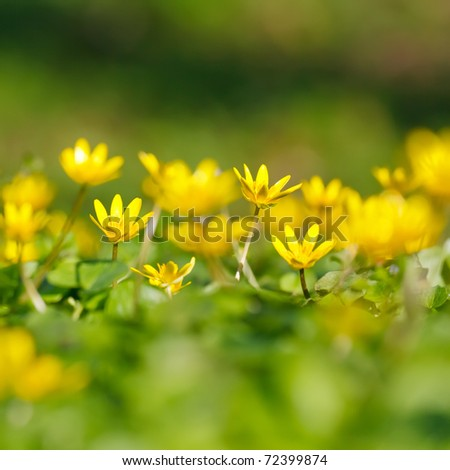 Close-up of yellow flowers - stock photo
