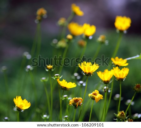 Close up of yellow flowers background - stock photo