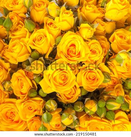 close up of yellow roses on the market - stock photo