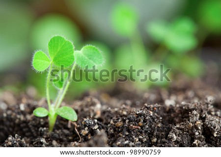 Close-up of young little sprouts in soil - stock photo