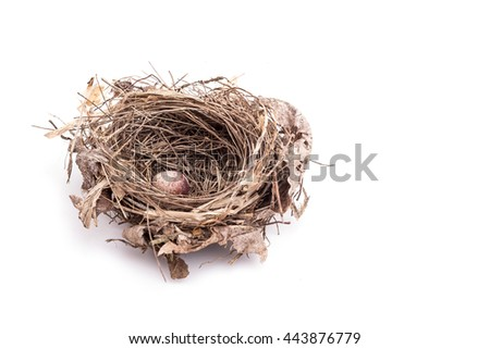 Close up old bird nest with one egg isolated on white background