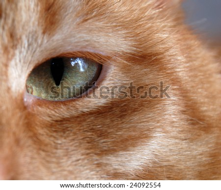 Close-up on a cat eye
