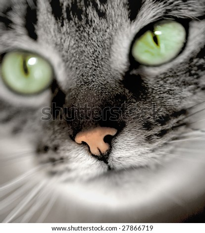 close up on a cat's face - stock photo