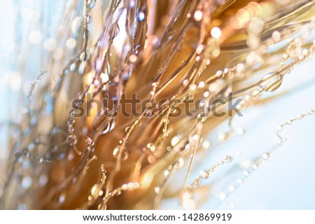 Close up on a head of wheat covered on curly hairs and water droplets. - stock photo