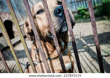 close up on amstaff mutt dog behind the bars - stock photo