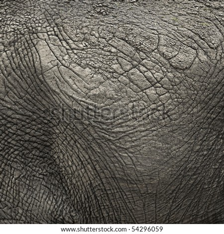 Close-up on an elephant hide - stock photo