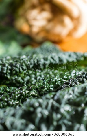 Close up on black cabbage leaves, all dewy and fresh from the vegetable garden. Swede in the background. Macro photography. - stock photo