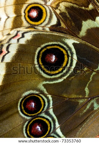 Close up on butterfly wings. - stock photo