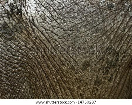 Close-up on dry elephant skin - stock photo