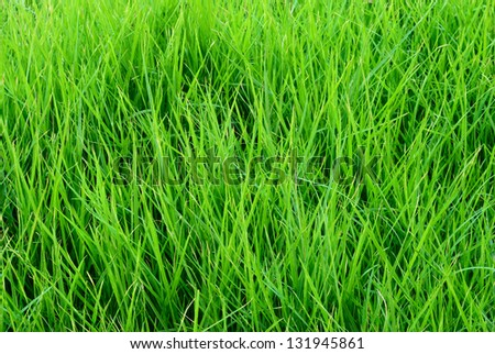 Close up on fresh green grass texture background - stock photo