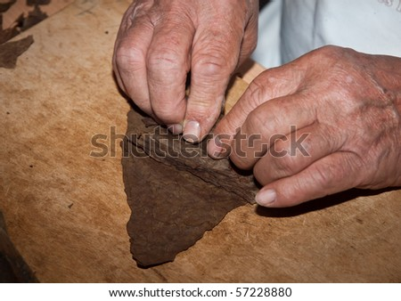Close up on hands of cigar maker rolling a cigar on wooden table.