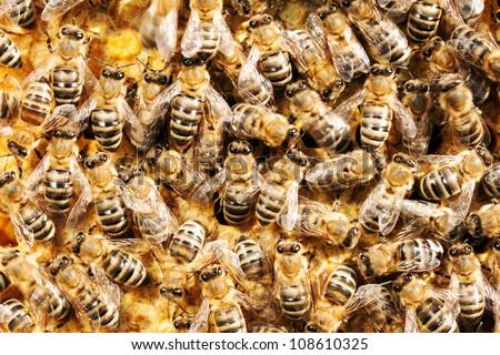 Close up on honey bees - stock photo