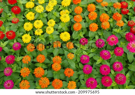 Close-up on multi colored flowers - stock photo