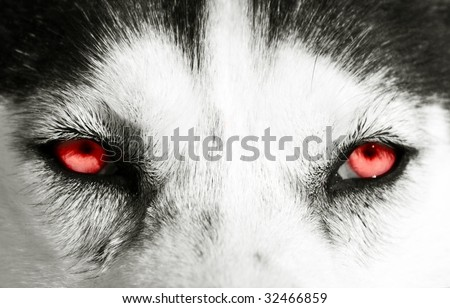 Close up on red eyes of a dog - stock photo