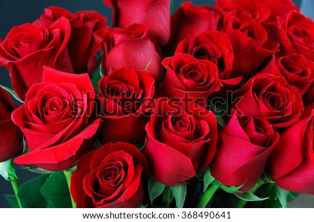 close up on red roses - stock photo