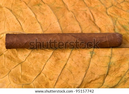 Close-up on the cigar tobacco leaves - stock photo