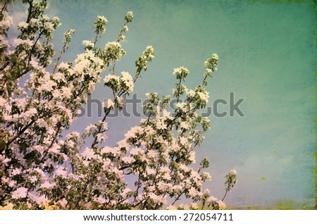 close up on twig of  blooming white flowers - stock photo