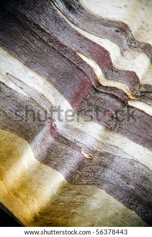 Close up on unusual bark colours