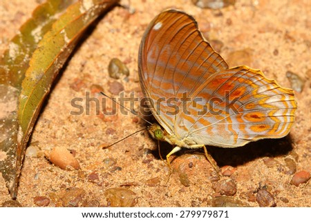 close up orange butterfly in nature thailand - stock photo