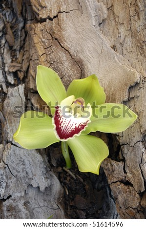 Close up orchid on old wooden texture - stock photo
