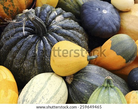 Close up organic varieties of pumpkins and squashes - stock photo