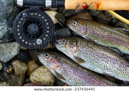 Close up overhead view of three wild trout with fishing fly reel, landing net and assorted flies on wet river bed stones - stock photo