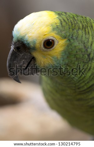 Close up page lovebird - stock photo