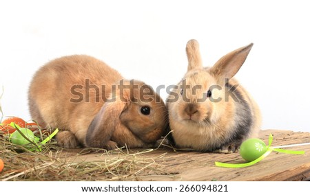 close-up pair of easter bunny on white background studio - stock photo