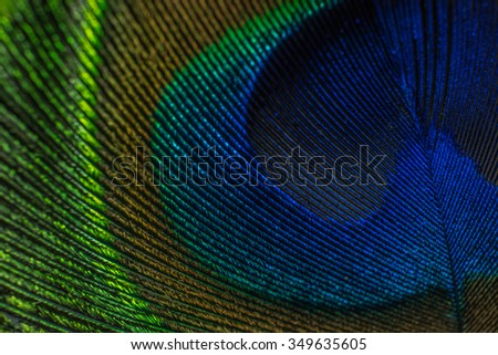 Close up peacock feather - stock photo