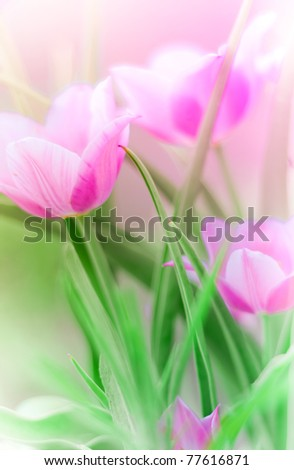 Close-up pf pink tulips in a bunch - stock photo