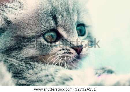Close up photo of a cute small cat - stock photo