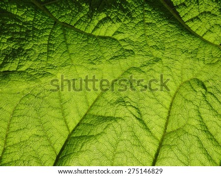 Close up photo of a leaf - stock photo