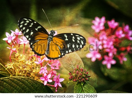 Close up photo of a pretty orange and black butterfly feeding on a pink flower in a garden. Photo has been treated with a texture for an artistic effect. - stock photo