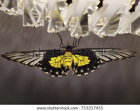 butterflies in the stomach stock images royaltyfree