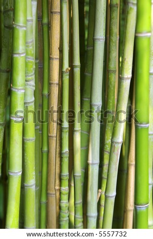Close-up photo of background of green bamboo canes