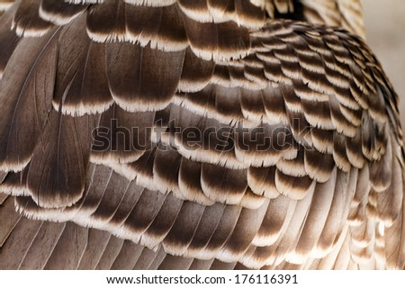 Close up photo of brown feathers - macro