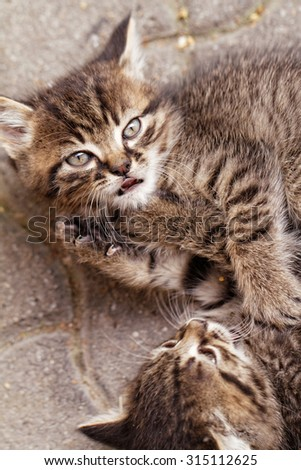 Close up photo of cute small cats - stock photo
