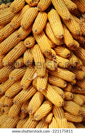 Close up photo of dried corn       - stock photo