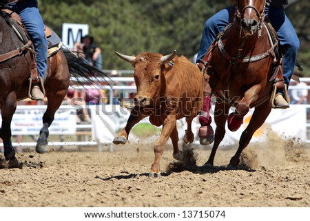 Close-up photo of fast rodeo action during a Steer Wrestling event (focus point on running steer). - stock photo