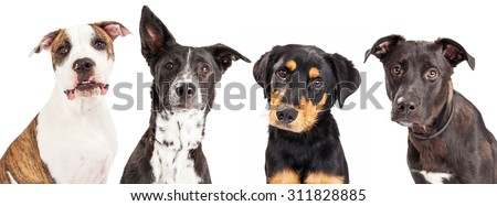 Close-up photo of four cute young dogs of different breeds that are all looking into the camera - stock photo