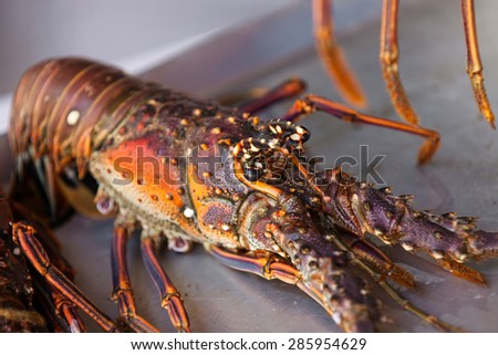 Close up photo of fresh lobster on the plate. - stock photo