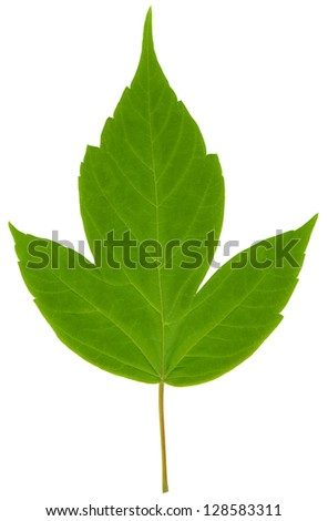 Close-up photo of green leaf - stock photo
