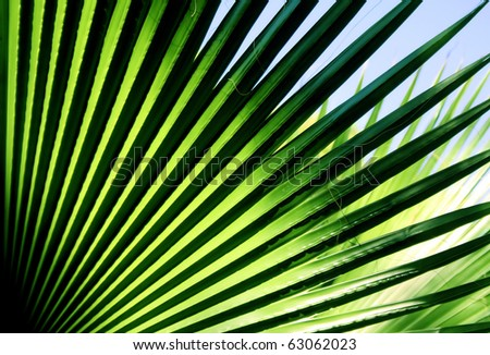 Close up photo of green palm tree leaf, sunlight effect