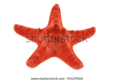 close-up photo of red starfish isolated on white background - stock photo