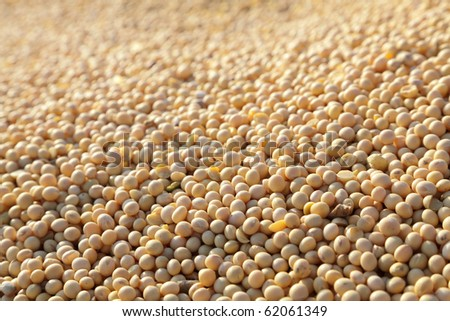Close up photo of soy bean after harvest - stock photo